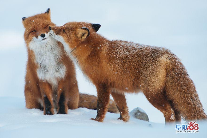 超萌的小动物,暖暖的吻
